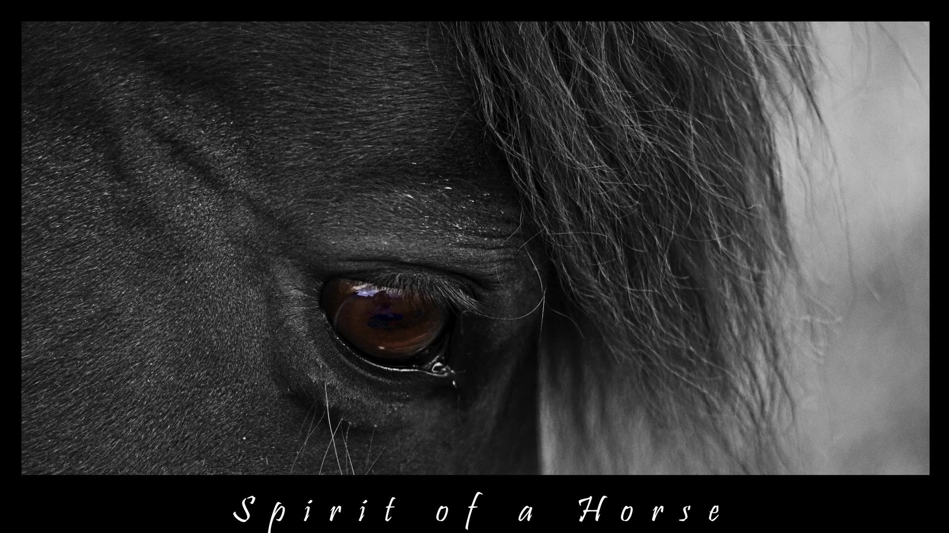 Spirit of a Horse