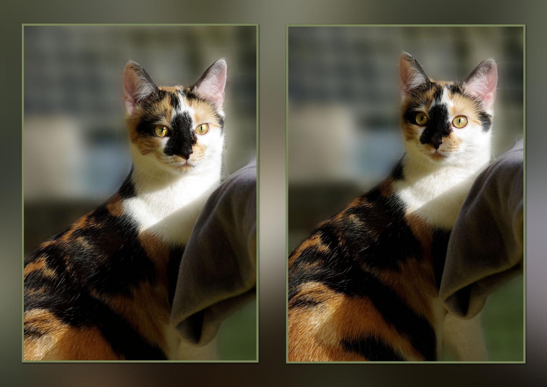 Spitz ( Katz ) pass auf