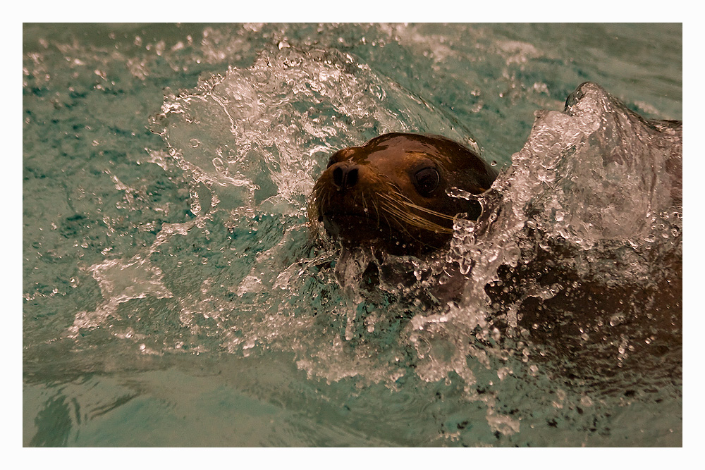 *Splash*