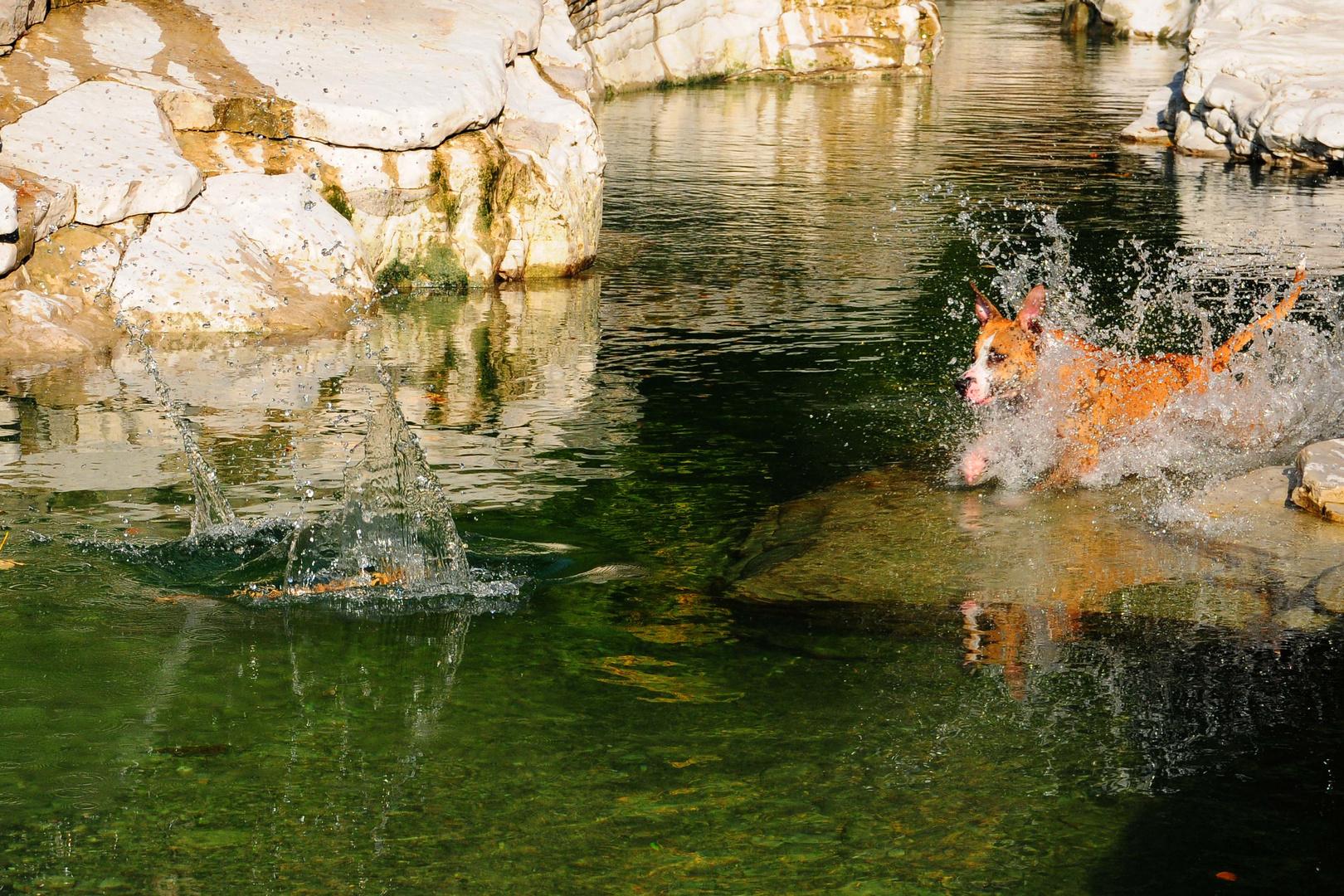 Splash - fang das Stöckchen