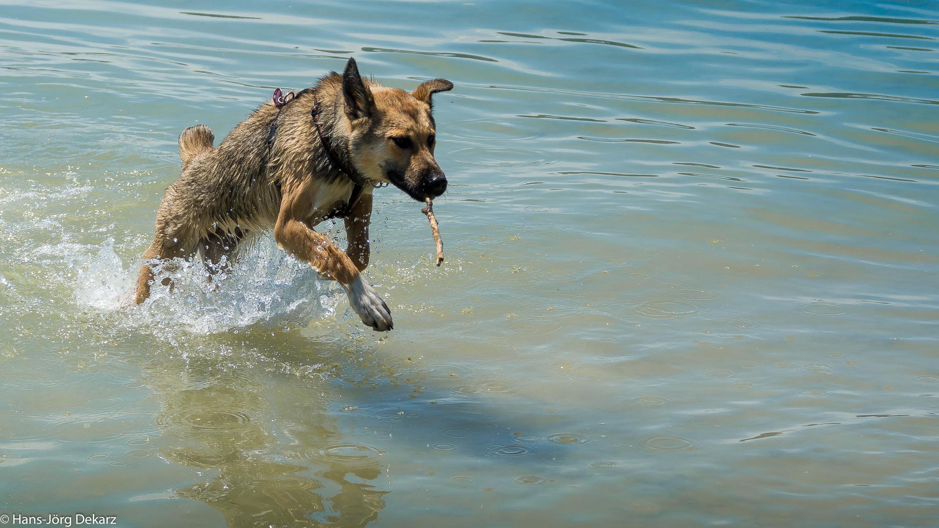 splish, splash.....