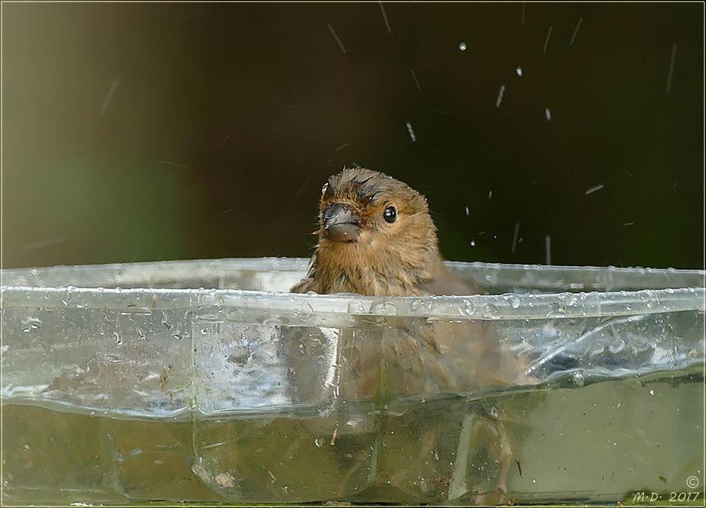 Splish-Splash.....