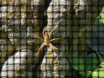 Spnflcht - ohne Spinne kein Flecht