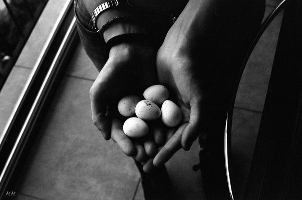 Spoils of eggs.