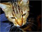 spontane Überlegung einer wilden Katze