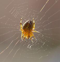 Spontanes Spinnen-Portrait im Abendlicht...