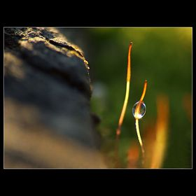 Plants, Fungi & Lichens