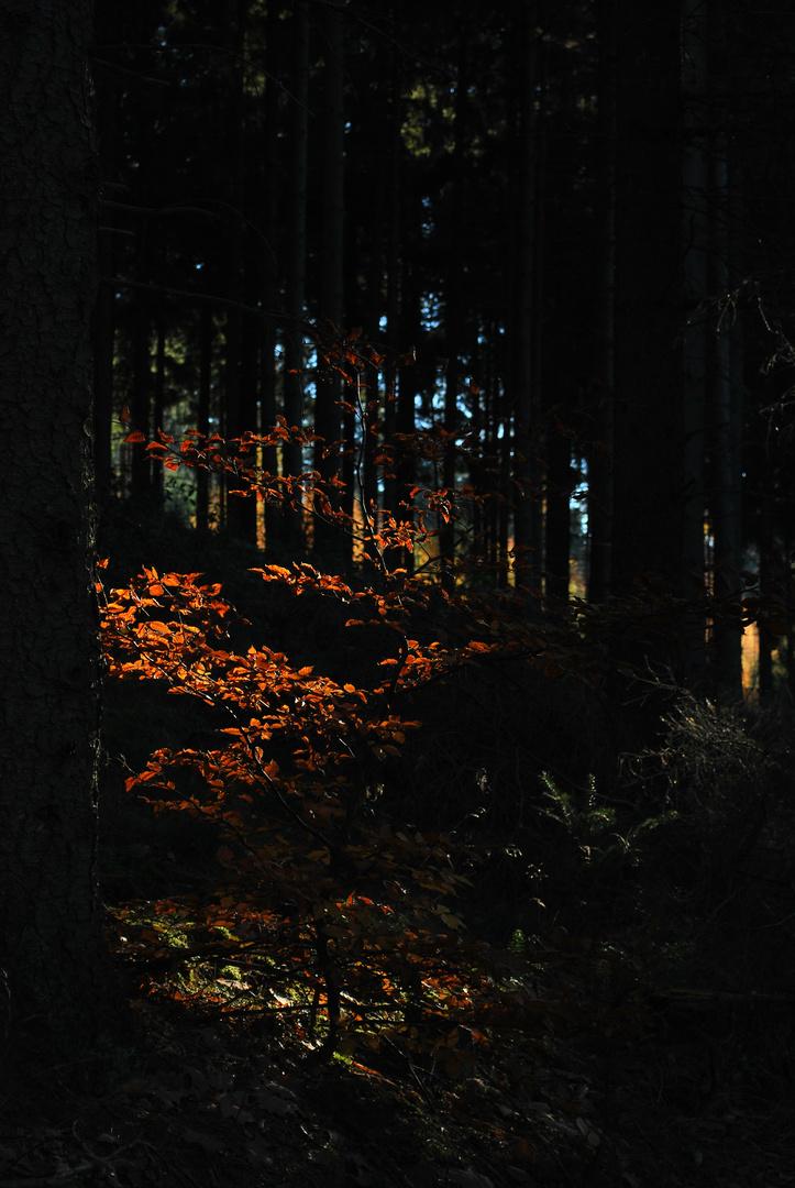 Spot an .... für den Herbst!