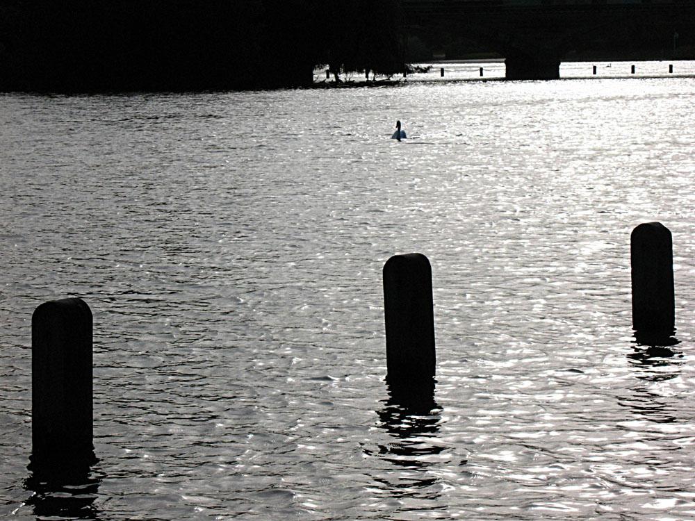 Spot the swan