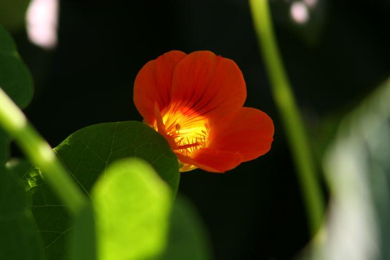 Spotlight Orange