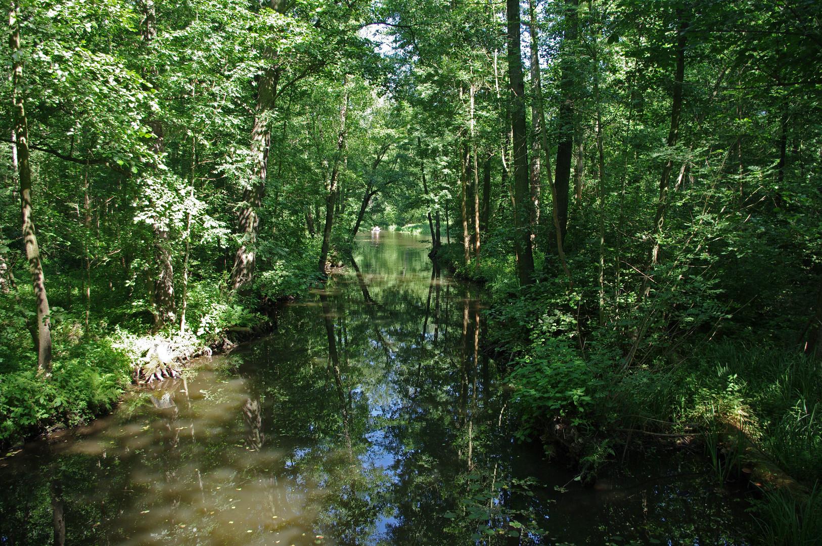 Spreewald oder Urwald