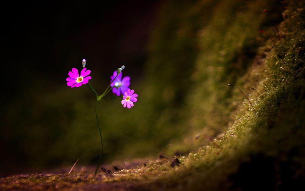Spring # 2 von rawmart-hübnerphotography