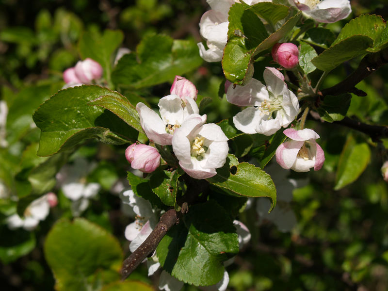 :-) spring