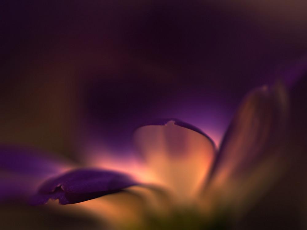 """"""" Spring """""""