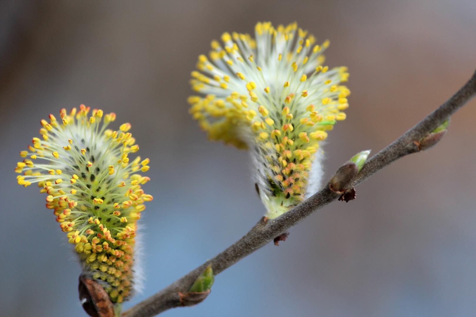 Spring arrives 2