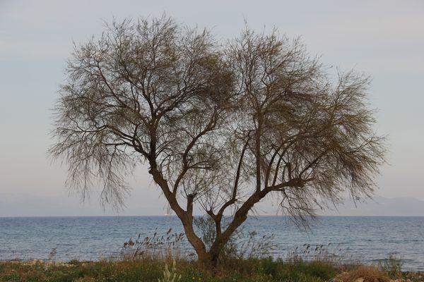 SPRING AT SEA