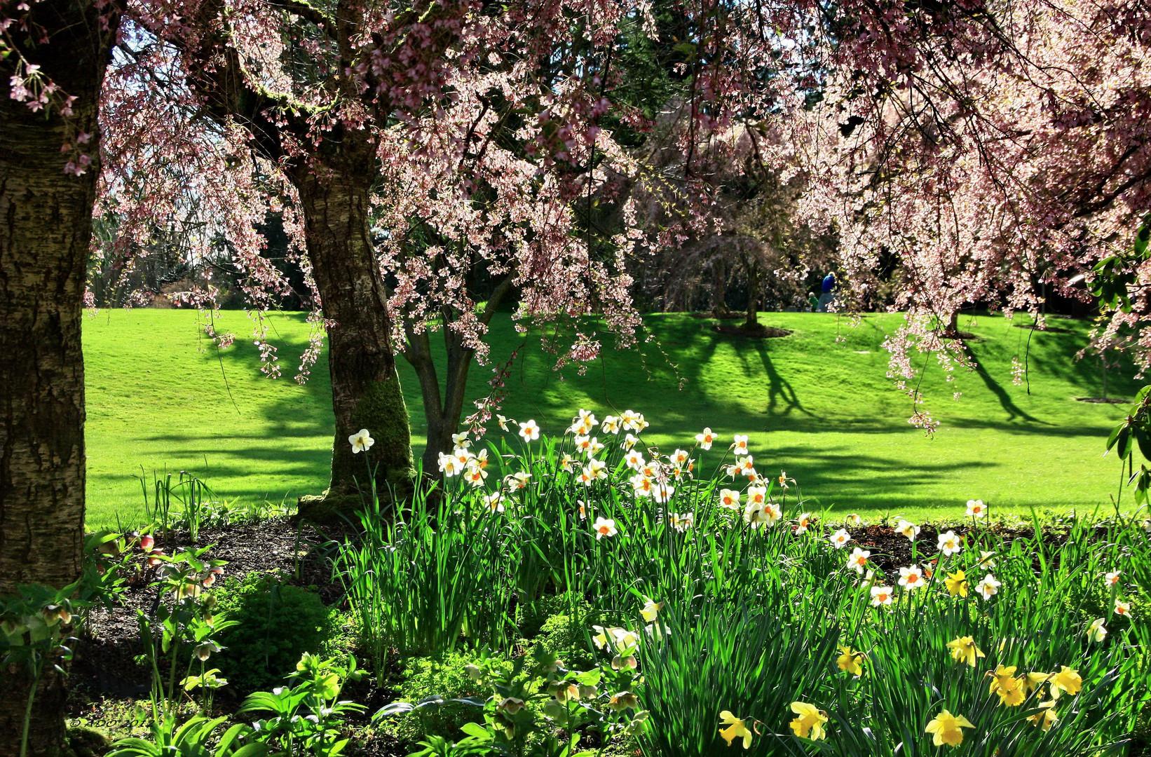 Spring at VanDusen Gardens