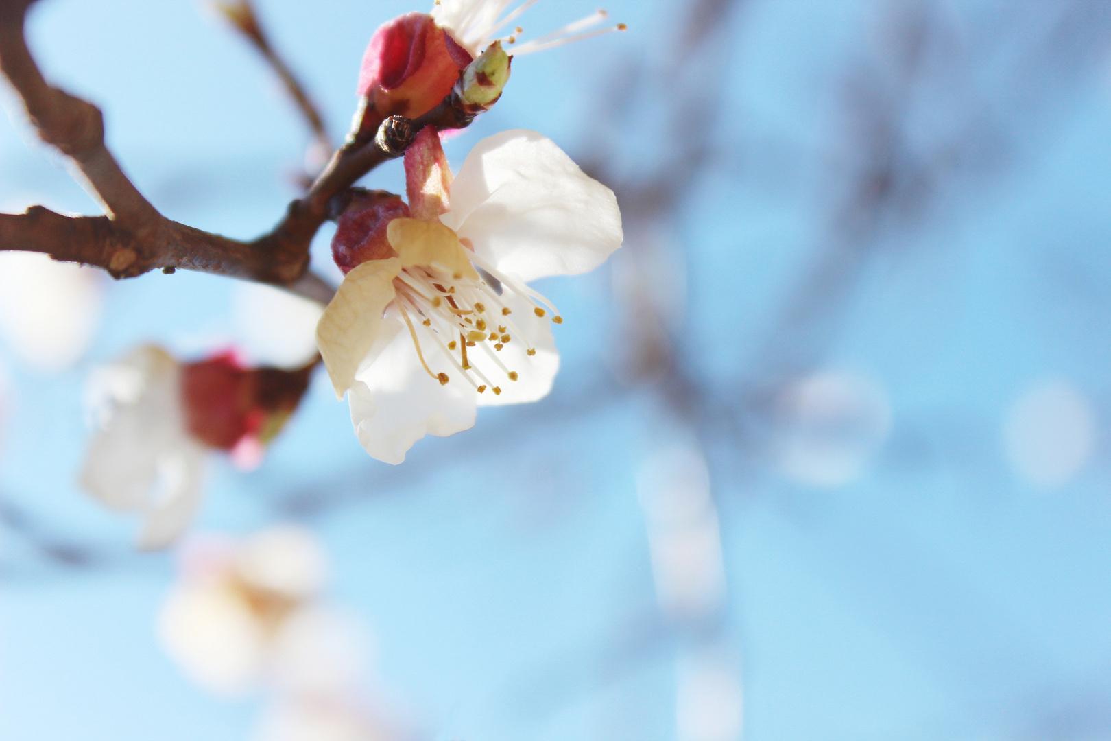 Spring Awakes