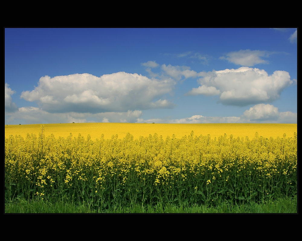 * spring color *