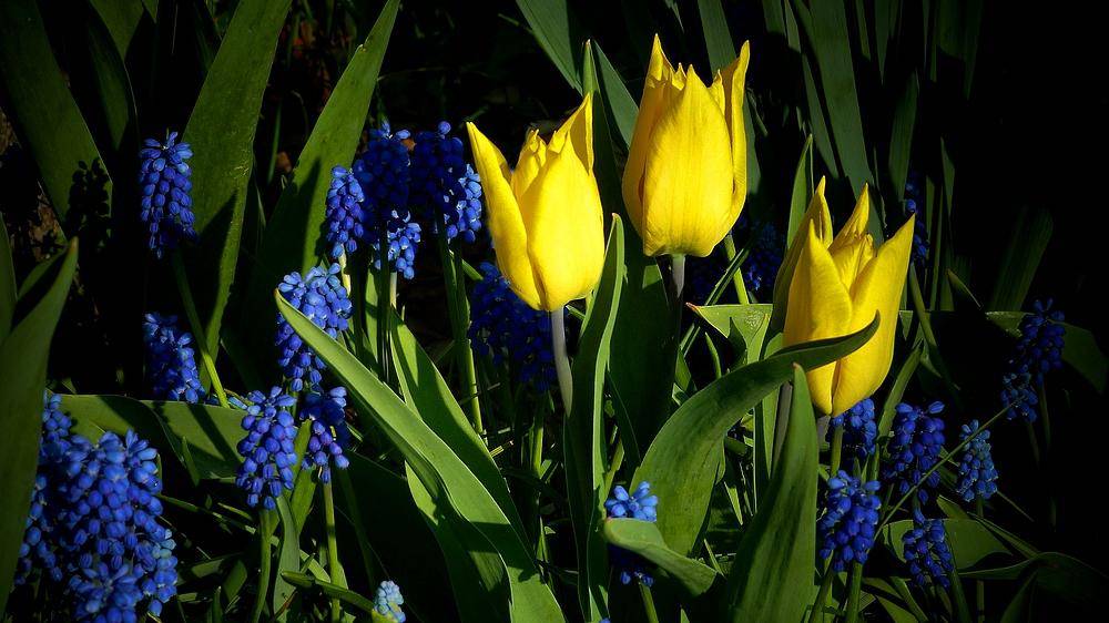 Spring Colours Parade (5)
