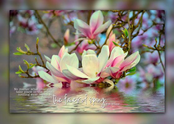 _Spring_
