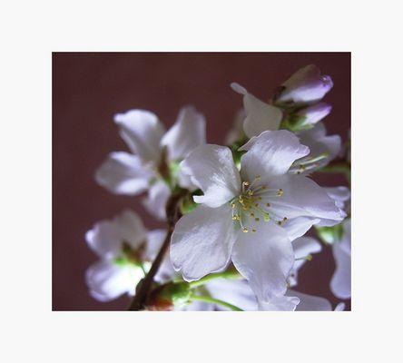 spring feelings - 2