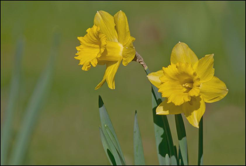 Spring Flowers ......