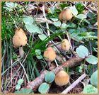 Spring Fungi Group