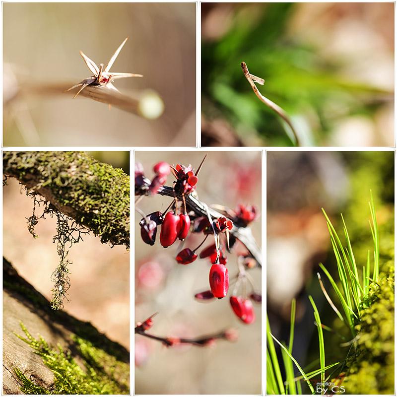 *** spring I ... ***