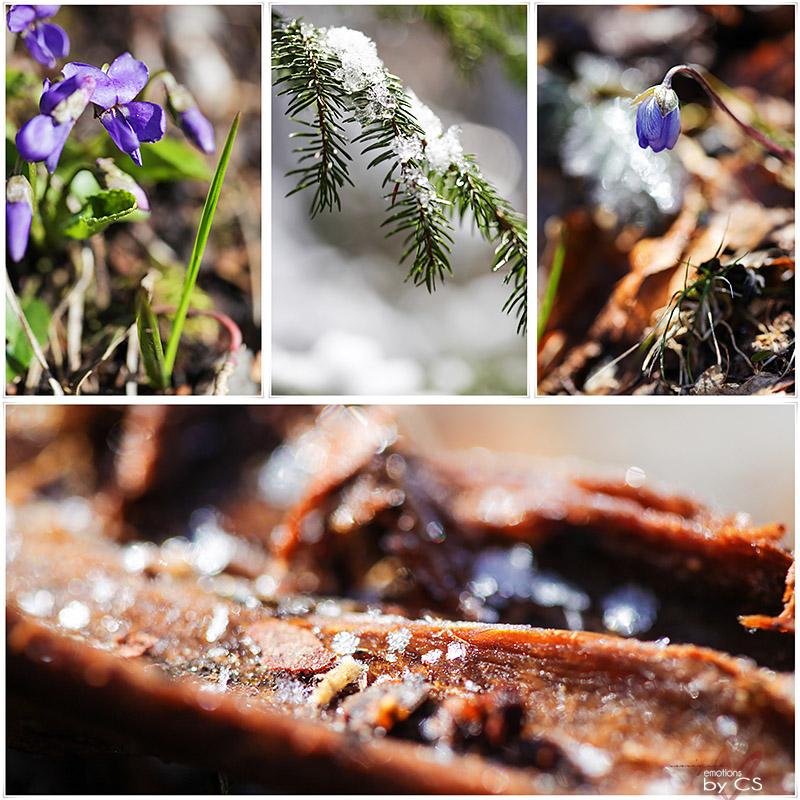 *** spring II ... ***