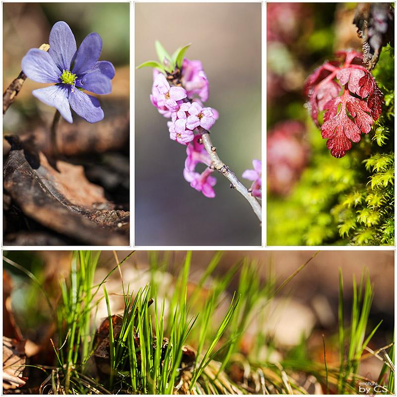 *** spring III ... ***