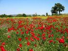 Spring in Anatolia