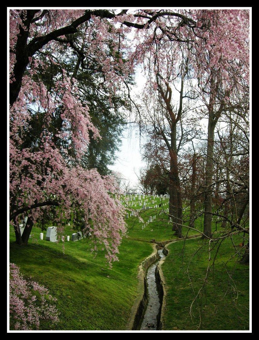 Spring in Arlington