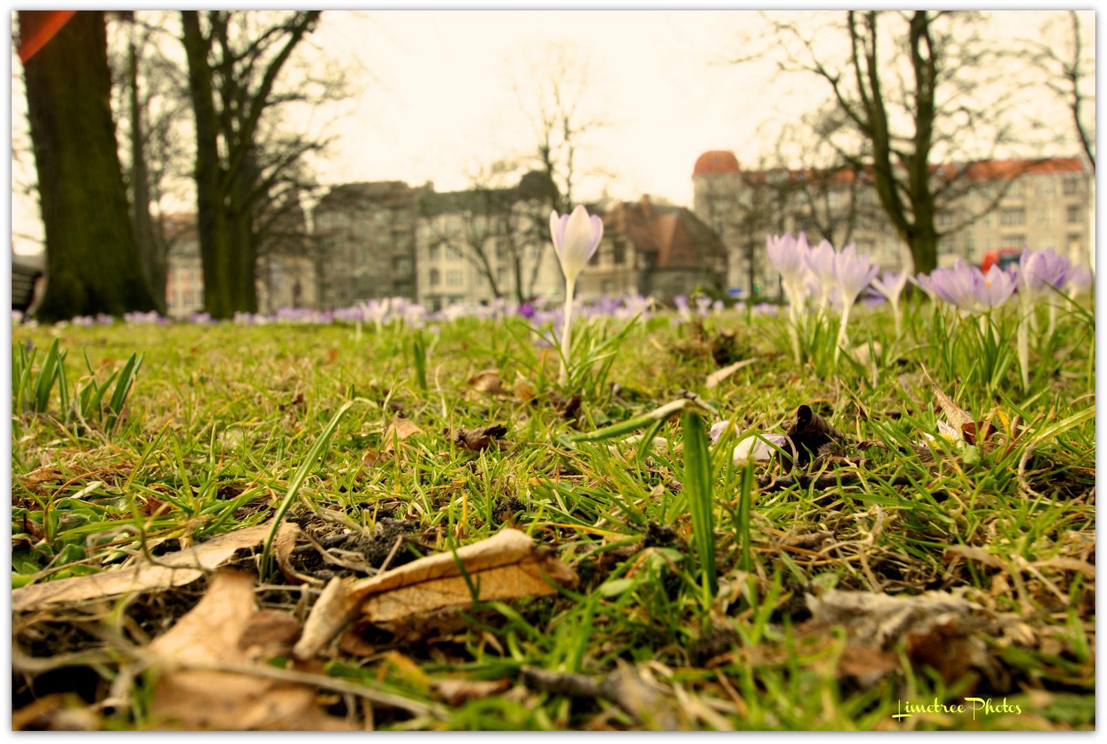 Spring in Berlin-Koepenick