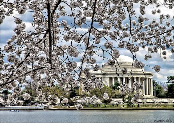 SPRING IN WASHINGTON, DC -II-