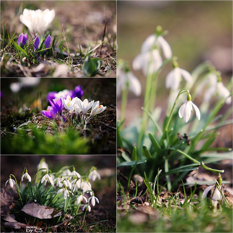 *** spring-models ... ***