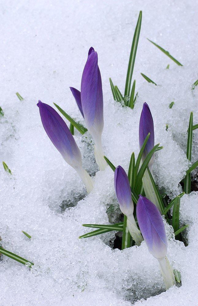 spring or winter?