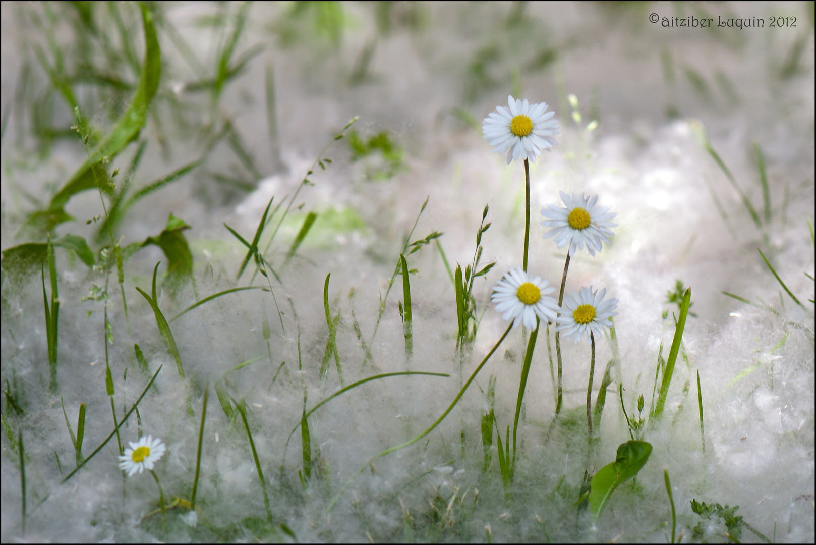 Spring snow....