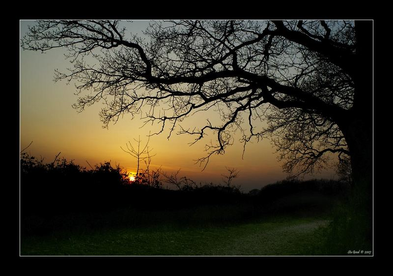 Spring Sunset #2