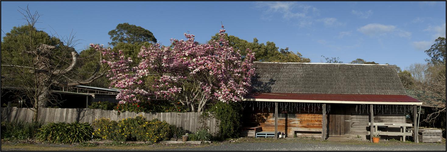 Spring-Tasmania