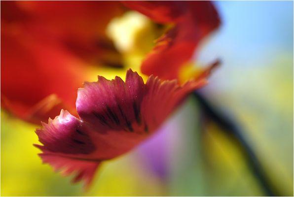 Spring-time (10)
