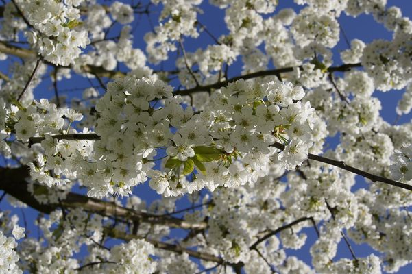 *spring time*