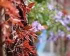 Spring to autumn