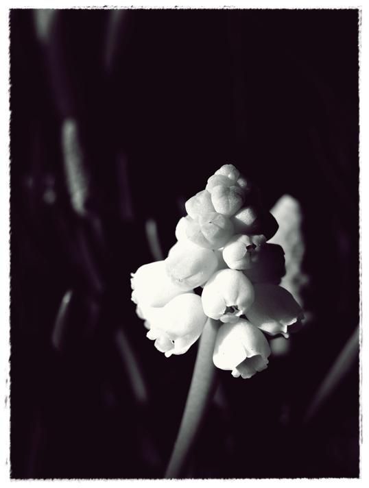 spring:breath