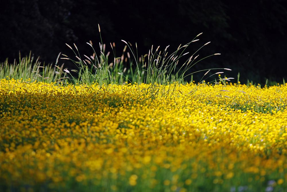 Springbrunnen auf Blumenwiese