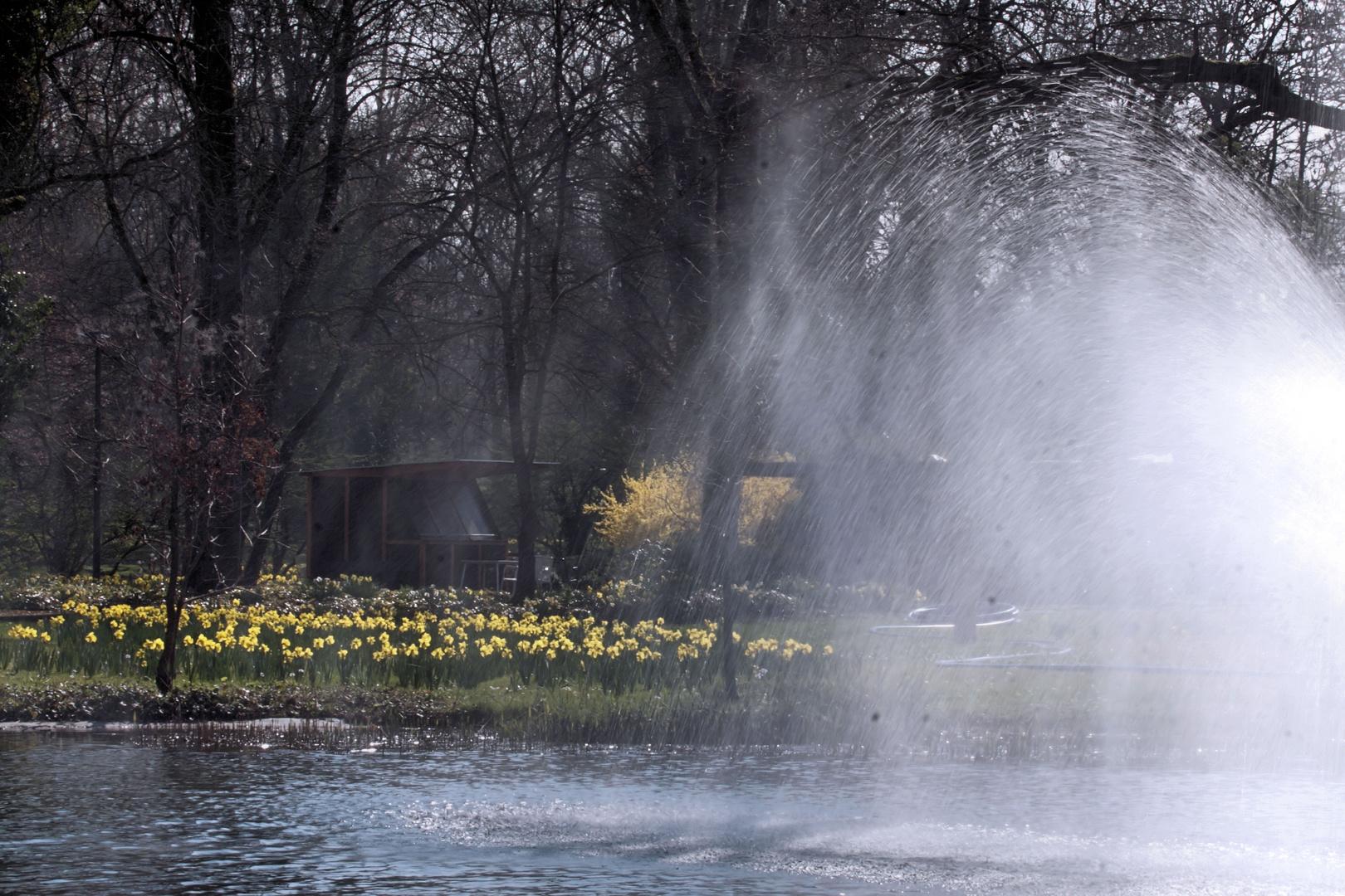 Springbrunnen im Teich vom Kurpark Bad Bellingen - Frühlingsanfang