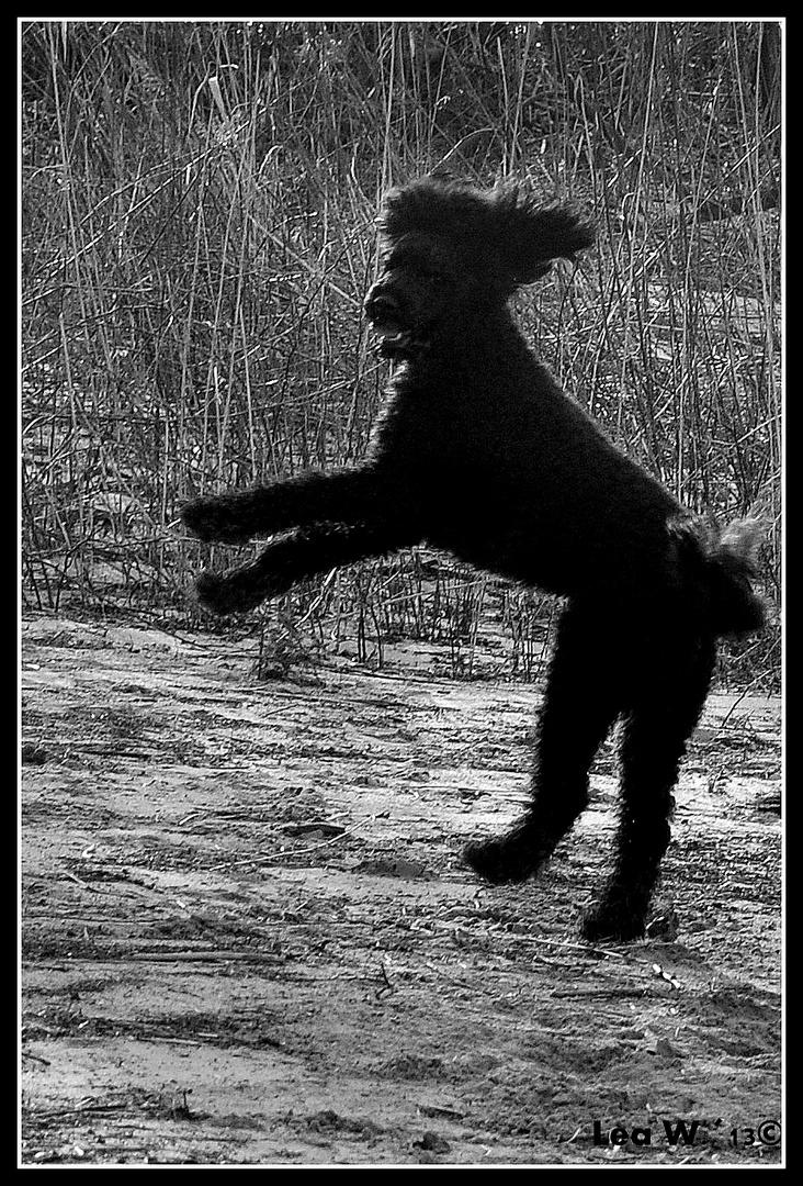 Springende Beigeisterung