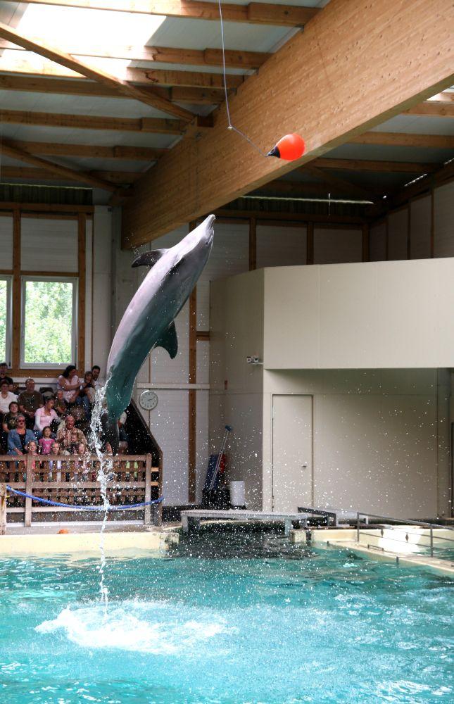 Springender Delphin 2/2
