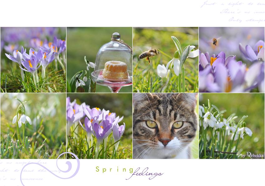 Springfeelings