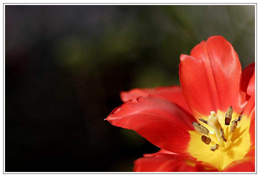 Springfire